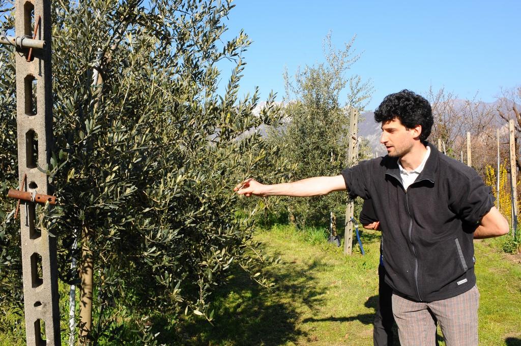 Matteo Ghilardi, l'Agromono della Tenuta Marocco